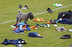 A curious dog wanders in during training and has a good check on the new seasons footwear