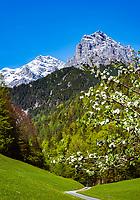 Oesterreich, Tirol, bei St. Ulrich am Pillersee: von der Jausenstation Halsern - zwischen St. Ulrich am Pillersee and Hochfilzen - hat man einen schoenen Blick auf die Loferer Steinberge | Austria, Tyrol, near bei St. Ulrich am Pillersee: hiking and mountainbiking area in front of Loferer Steinberge mountains between St. Ulrich am Pillersee and Hochfilzen