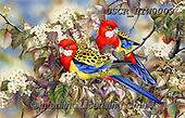 ,REALISTIC ANIMALS, REALISTISCHE TIERE, ANIMALES REALISTICOS, paintings+++++,USCRHIW0009,#a#, EVERYDAY,parrots