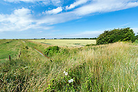 Wheat field with large drain on the boundary - Lincolnshire, July