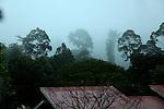 danum valley<br /> borneo, malaysia