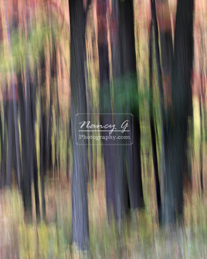 Artistic Vertical blur of Fall Color leaves of trees in Northern Wisconsin