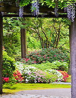 Gift card photo of a wooden arbor covered with blooming wisteria leads the way into a garden of azaleas and rhododendrons in full Spring bloom with Japanese maples in the background as seen in the Portland Japanese Garden