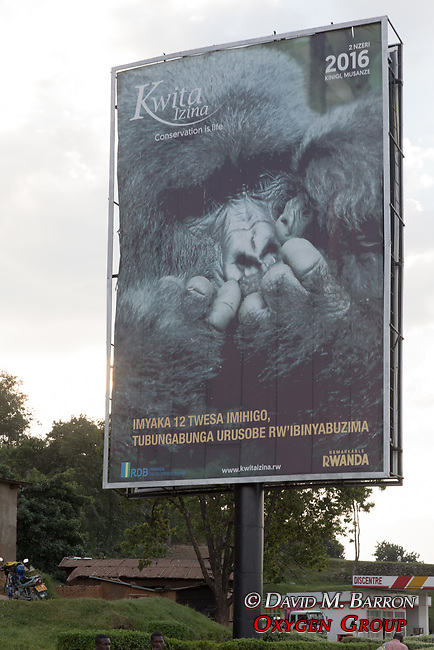 Tiurism Billboard With Image Of Gorilla's