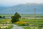 Lund, Nevada: street with power poles, alfalfa fields, sunflowers, White River Valley; Grant Range