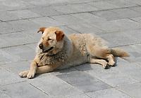 A dog enjoying the sun in Ngong Ping Village, Lantau Island, Hong Kong on 6.4.19.