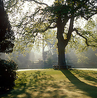 A tall tree is silhouetted against the summer sunlight in the gardens at Bodnant
