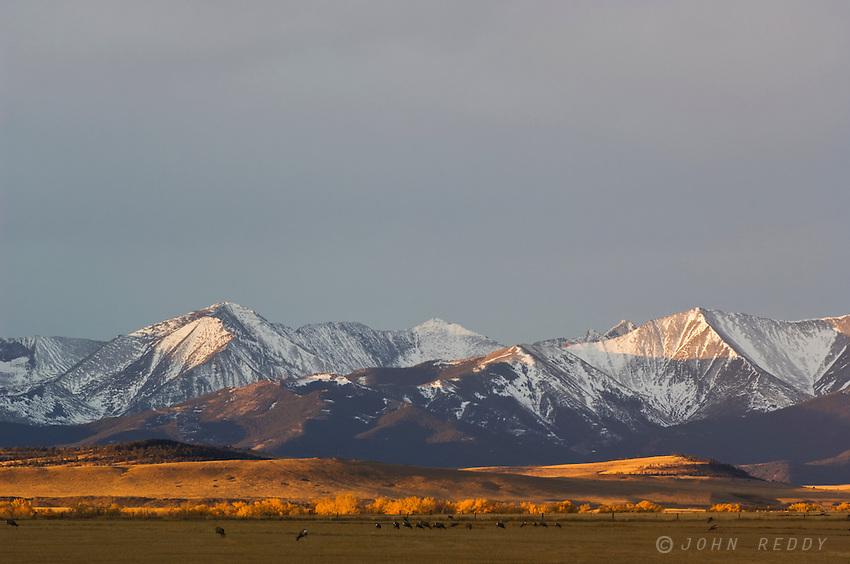 Crazy Mountains at sunrise and deer near Twodot, MT