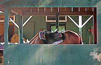 Saratoga Race Course 8-29-11