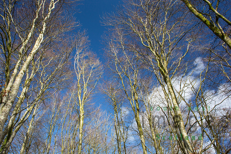 Looking upwards to sky and tree tops in Castle Loch nature reserve at Lochmaben, Scotland