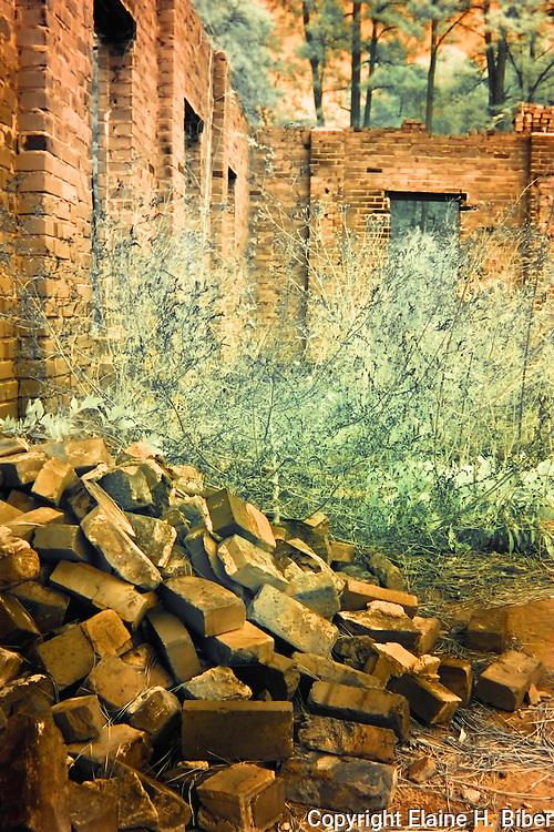 Vegetation reclaims old iceplant