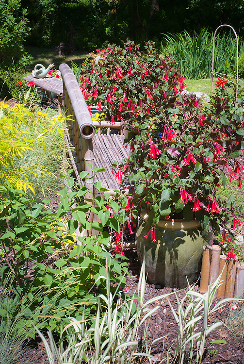 Fuchsias in container pots plant flower stock photography fuchsia in pot container ornamental grass sambucus garden bench made of bamboo workwithnaturefo