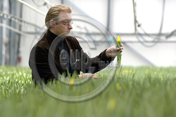 HILLEGOM - NETHERLANDS - 18 MARCH 2003-- Nord Lommerse, Dutch exporter of flower Bulb. -- Erik LOMMERSE is the third generation running the mainly Tulip bulb exporting company here at his tulip grower friends greenhouse.-- PHOTO:  EUP-IMAGES.COM / JUHA ROININEN