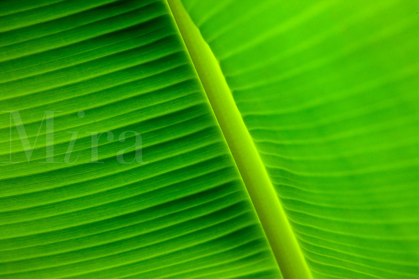Palm leave detail.