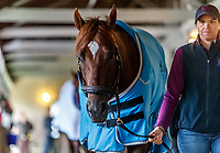 LOUISVILLE, KENTUCKY - MAY 03: Irish War Cry, owned by Isabelle de Tomaso and trained by H. Graham Motion, is walked in his barn at Churchill Downs on May 3, 2017 in Louisville, Kentucky. (Photo by Jesse Caris/Eclipse Sportswire/Getty Images)