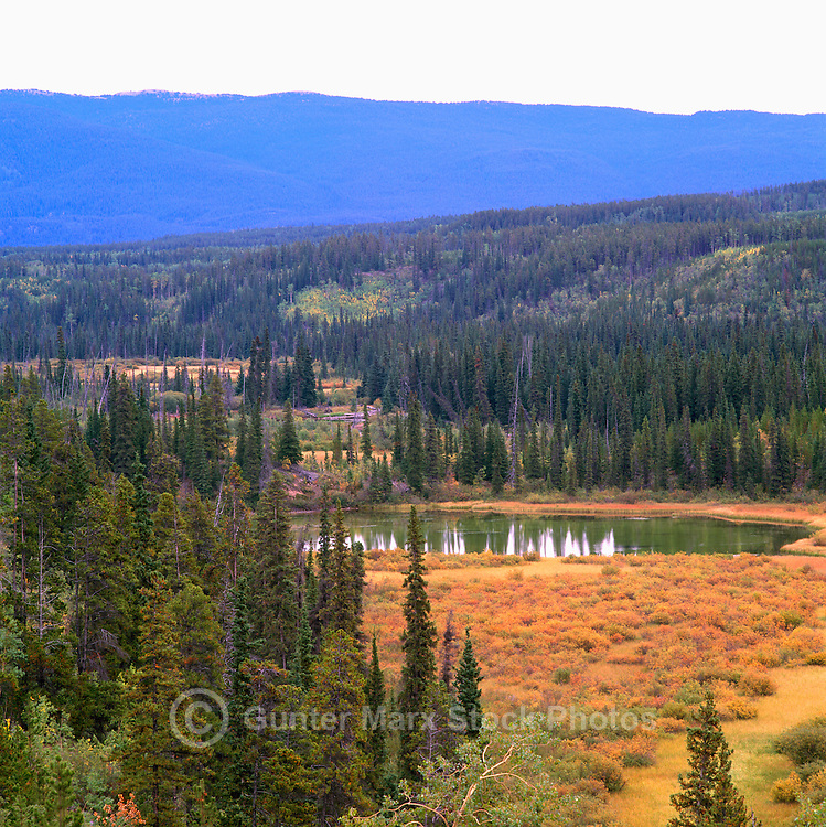 Boreal Forest along Alaska Highway, Northern BC, British Columbia, Canada, Autumn