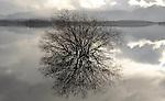 18-02-2014: Reflections  on the water at Killarney Golf and Fishing Club on Tuesday morning. Eamonn Keogh (MacMonagle, Killarney)