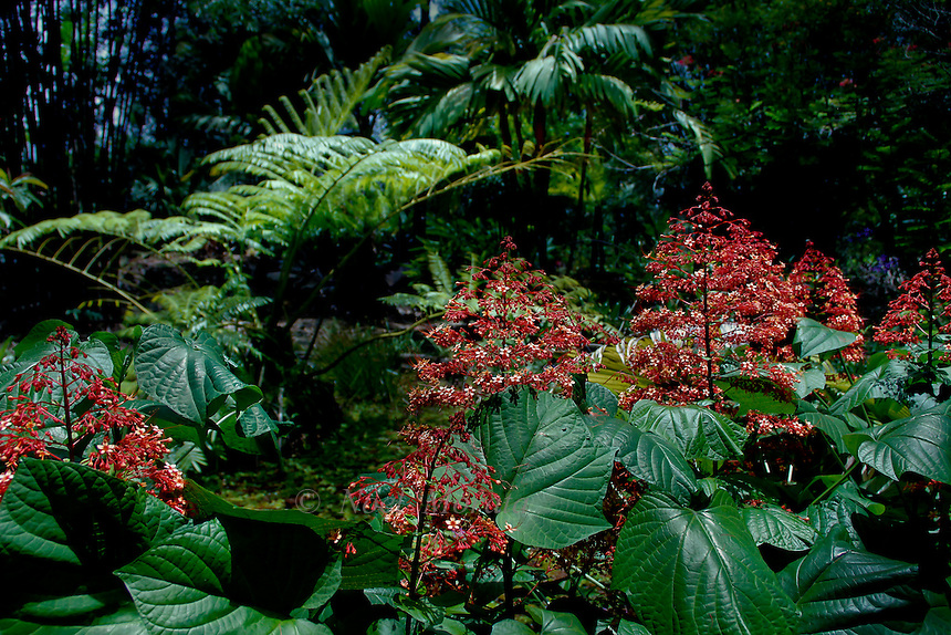 Hawaiian tropical gardens noel morata photography for Unusual trees for small gardens