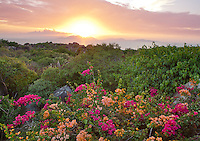 Virgin Gorda, British Virgin Islands, Caribbean <br /> View of setting sun over distant islands in the Caribbean Sea with hillside flowers and forest canopy in the foreground