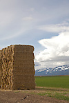 Oregon, Grant County, Pacific Northwest, U.S.A., ranch country, baled hay, Blue Mountains, spring,