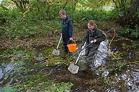 Electro fishing survey of Norfolk's chalk rivers, Norfolk Rivers Trust, autumn, Norfolk UK