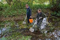 Electro fishing survey of Norfolk's chalk rivers, Norfolk Rivers Trust, autumn, Norfolk UK