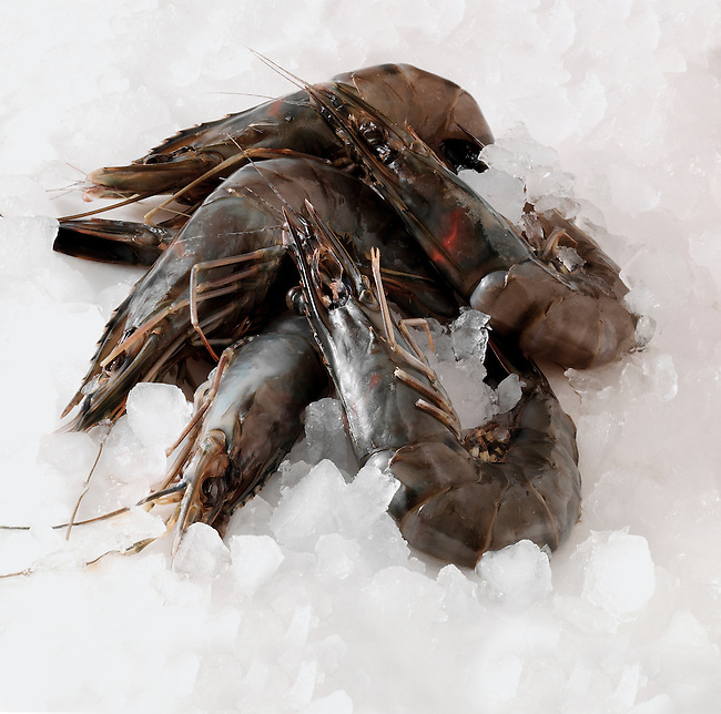 Fresh Raw Prawns, stock photos