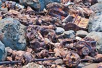 Old junkyard of car and truck parts at seashore. Kauai, Hawaii.
