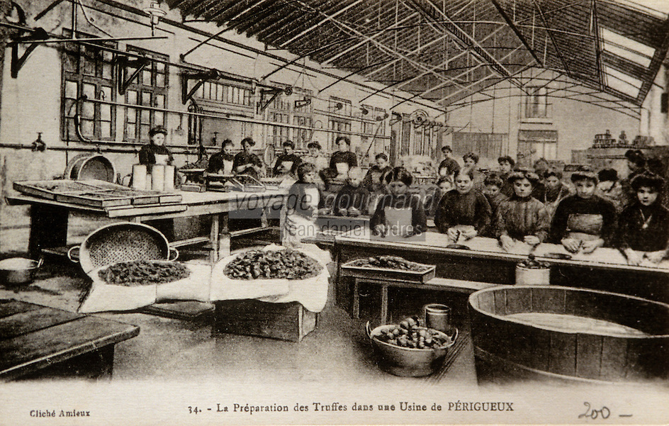 Europe/France/Midi-Pyrénées/46/Lot/Vallée du Lot/Cahors : Vieille carte postale sur le thème de la truffe - Collection Mr Pebeyre