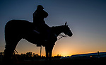 May 15, 2019 : An outrider watches as horses prepare for Preakness Week at Pimlico Race Course in Baltimore, Maryland. Scott Serio/Eclipse Sportswire/CSM