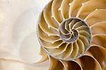 Shell Design