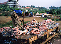 Fisherman stripping filets of Nileperch