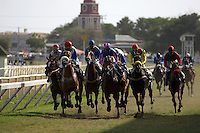 The leading horses race down the straight to the finishing post at Garrison Savannah racecourse in Bridgetown.
