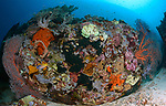 Reef in a bubble, Maumere, Indonesia, Babi, Flores Sea, Maumere Festival, Suzan Meldonian