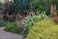 Colorful garden border with foliage plants - , Cistus 'Little Miss Sunshine' with Astelia 'Silver Shadow', Rosemary Chef's Choice, Digitalis Digiplexis® 'Apricot', Cordyline 'Design-A-Line', red foliage, Phormium 'Black Adder', and blue flowering Salvia 'Amistad'; Sunset Plants