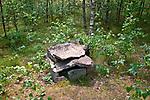Leśno, 2011-07-09. Groby skrzynkowe kultury pomorskiej, ścieżka lichenologiczno-kulturowa w Leśnie