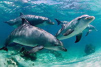 bottlenose dolphins photos
