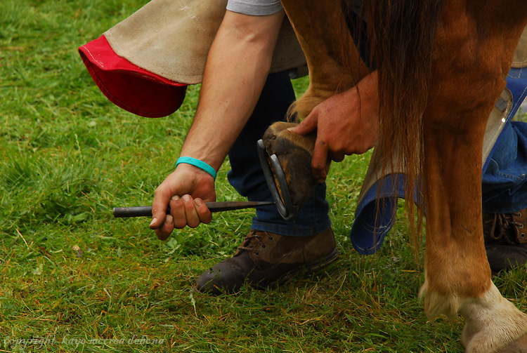 Farrier shoeing a horse Scenes from Montana