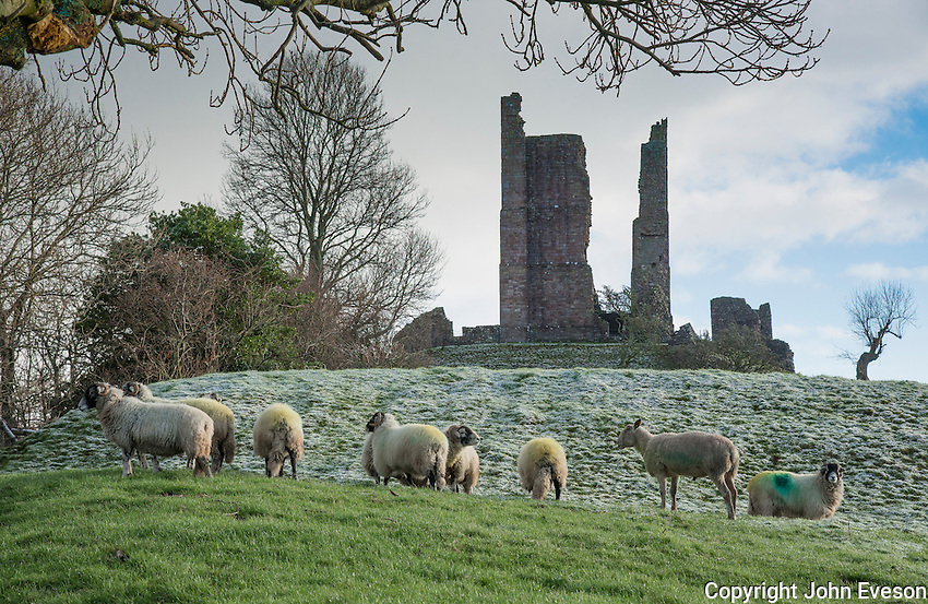 Brough Castle in frost, with Swaledale ewes and Bluefaced Leicester ram Church Brough, Kirkby Stephen , Cumbria.