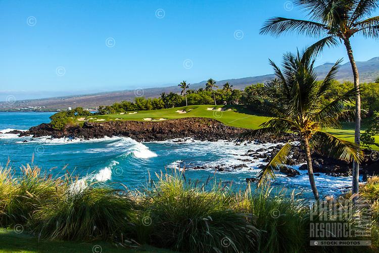 Sunlit golf greens across the ocean, framed by fountain grass and palm trees, Golf Course at Mauna Kea, Mauna Kea Beach Hotel, Big Island.