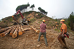 Ellsworth Creek Preserve, forest thinning, blowdown prevention, Kyle Smith, Nature Conservancy forester, (left),  Jeff Rippet, Rippet Timber Cutting, logging, Nature Conservancy, Washington State, Willapa Bay Protected Lands,  Washington Coast, Emerald Edge Project,