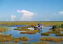 Fakahatchee Strand area of the Florida, Everglades