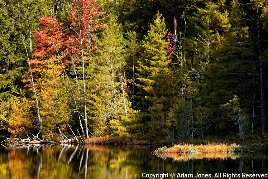 Shoreline of  Red Jack Lake at sunrise, Hiawatha National Forest, Upper Peninsula of Michigan.