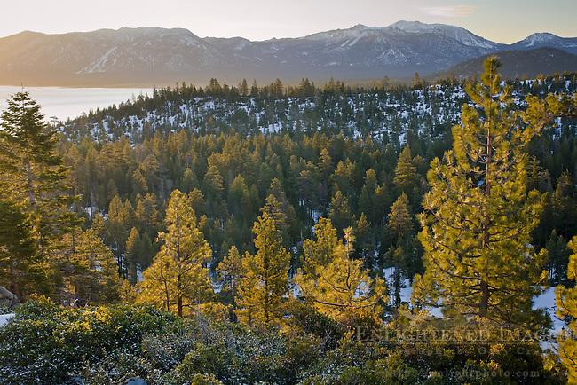 Forest in winter near South Lake Tahoe, California