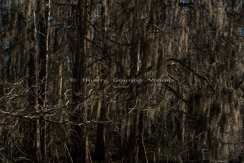 Bayou<br />