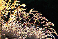 A Mix of Grasses