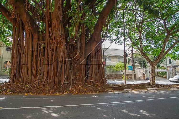 Raiz de árvore quebrando calçada, São Paulo - SP, 12/2016.