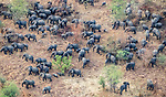 Aerial of African bush elephants (Loxodonta africana), Zakouma National Park, Chad<br />
