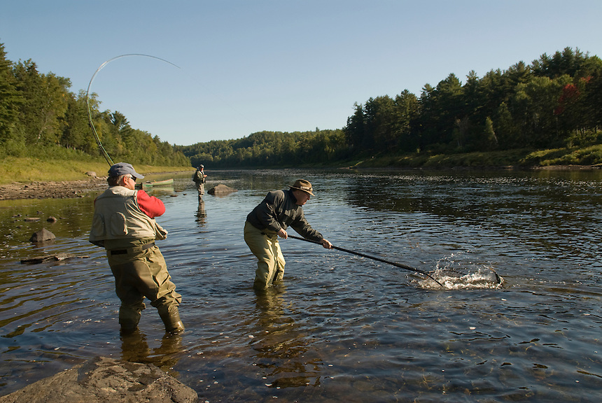 New Brunswick, Canada; Atlantic salmon fishing (Salmo solar), on the southwest fork of the Miramichi River, one of the province's most famous salmon fishing waters.  These waters have been guided by the Colford family since 1929 and are well known guides.