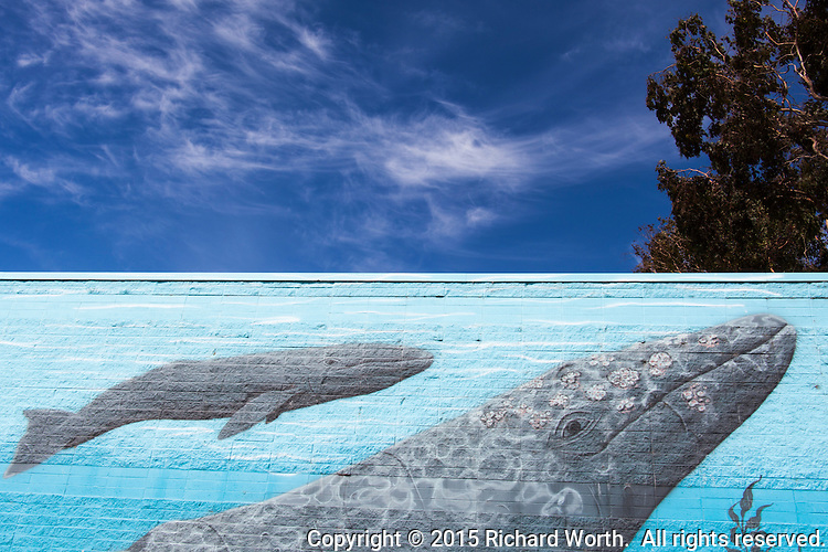 "Whales painted on the side of a building under a blue sky with clouds and tree.  At the lower right, the mural is signed and dated, ""Greenwood 2008""."
